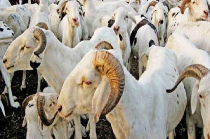 Tabaski 2016: les besoins en moutons estimés à 750 000