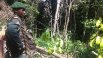 RDC: dans le camp Garlic, une des places fortes des ADF