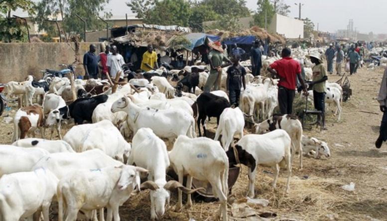 Tabaski 2016: Les prix des moutons jugés élevés à Kolda