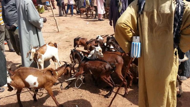Mali: 40 personnes contaminées par l'épidémie de fièvre hémorragique