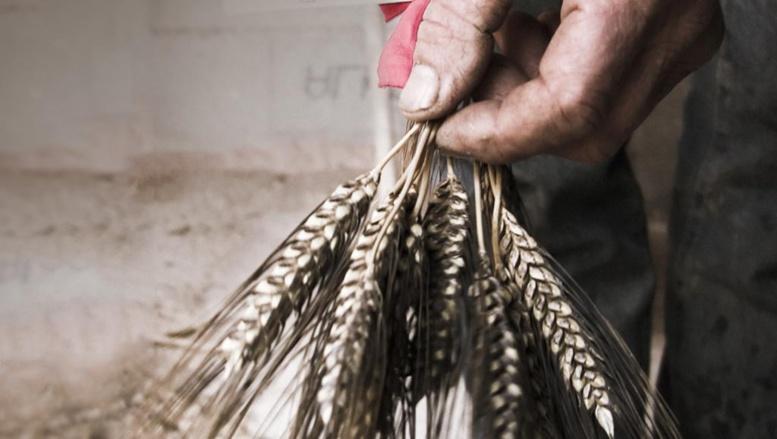 [Webdoc] A la recherche des semences perdues