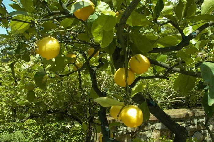 Santé: 18 bienfaits étonnants du citron dont vous n'avez jamais entendu parler ! Vous allez adorer le n° 6 !