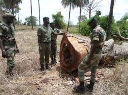 Tolérance zéro contre les trafiquants de bois: Macky actionne l'Armée