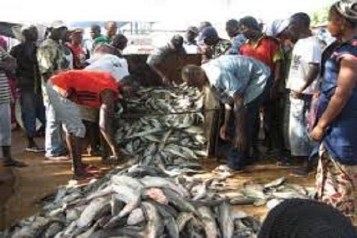 Pêche : 2 millions de F Cfa perdus chaque année