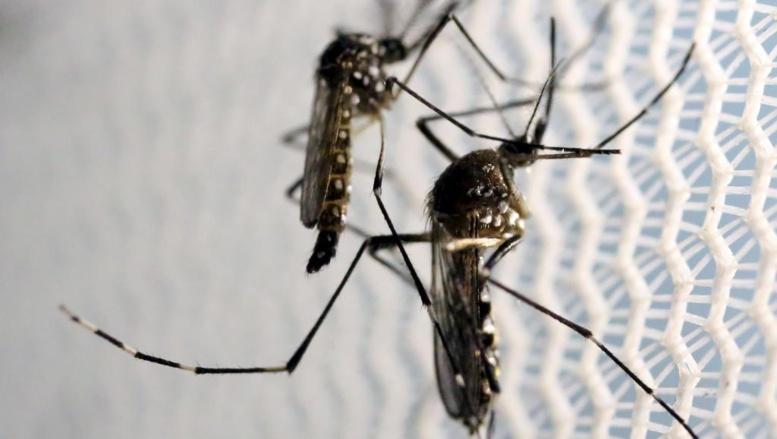Le Burkina Faso touché par une épidémie de dengue