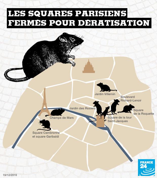 Les rats ont envahi Paris, la mairie contre-attaque