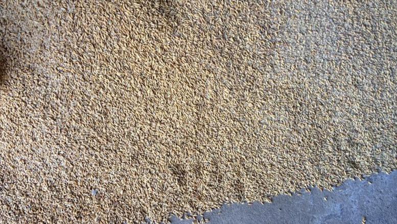 Nigeria: une centaine de sacs de riz impropre à la consommation saisis à Lagos