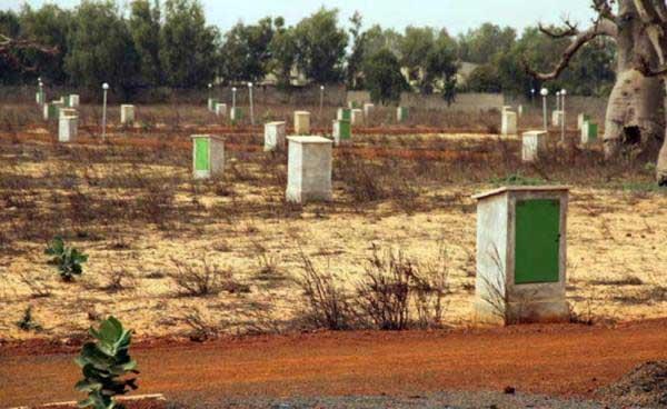 Litige Territoriaux : L'ombre de Mbane place sur le Saloum