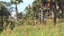 LRA en Ouganda: le dramatique destin des enfants nés de la rébellion