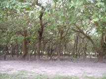 La forêt recule de plus en plus du fait des agressions