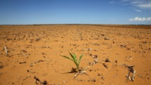 Afrique du Sud: louer des voitures sales pour lutter contre la sécheresse
