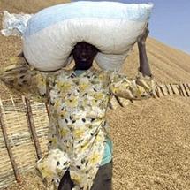 Les paysans vont marcher pour l'augmentation du prix de l'arachide