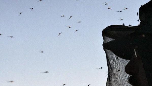 Paludisme : Mise au jour de processus complexes de transmission