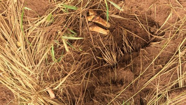 RDC: au moins 8 fosses communes découvertes autour de Tshimbulu
