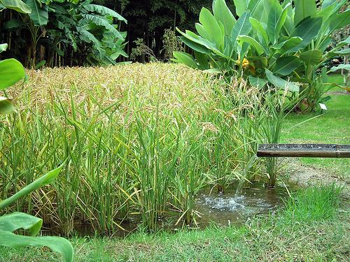 Un expert vante le riz casamançais et prône sa commercialisation sous le label ''Casariz''