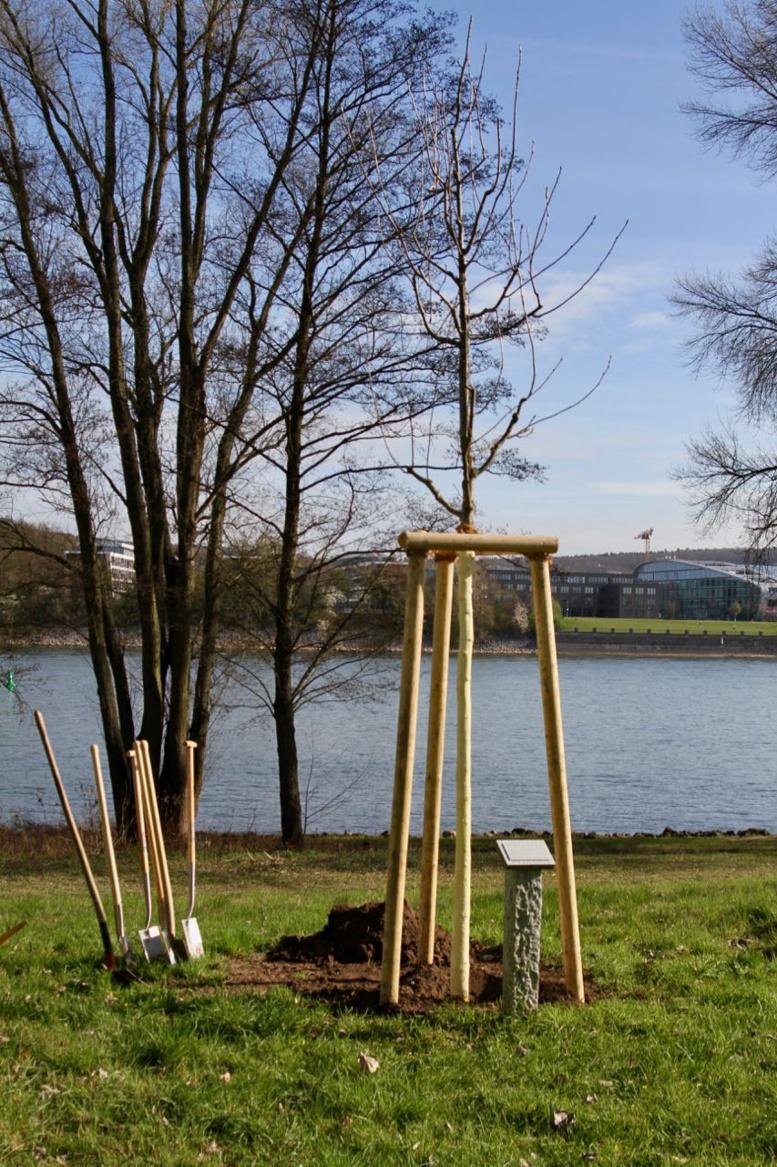 Allemagne : l'Arbre de l'intégrité burkinabè désormais au bord du Rhin