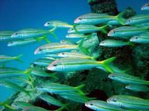 Sénégal-Guinée Bissau mer commune : 200 millions pour évaluer les ressources halieutiques