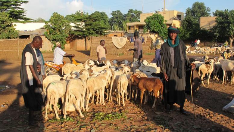 Mali: 34 Peuls arrêtés et maltraités dans le centre du pays