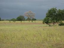 Les pluies utiles se font désirer à Ziguinchor, les paysans s'embarrassent