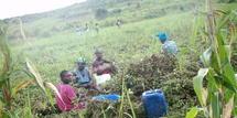 Des femmes aux champs (photo tumbuktoo.com)