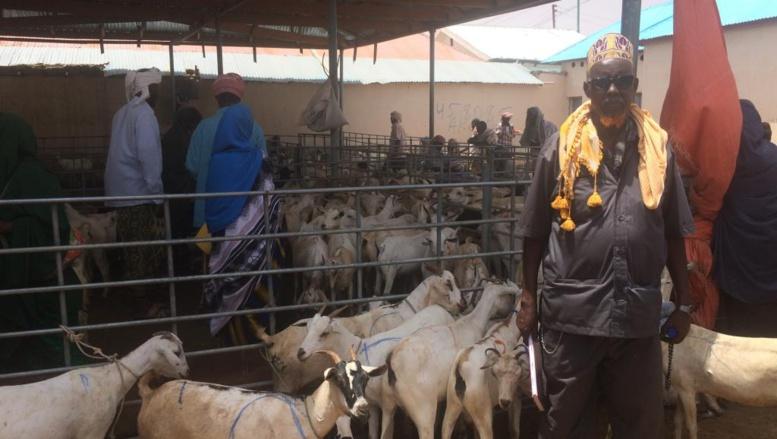 Somalie] Sécheresse au Puntland: sur le marché aux chèvres de Garowe