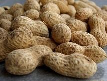 Commercialisation de l'arachide : le prix au producteur maintenu à 165 FCF