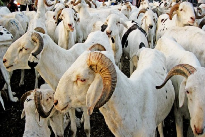 Aminata Mbengue Ndiaye : «Chaque famille aura un mouton…»