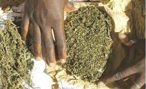 Kaolack : 140 kg de chanvre indien saisis