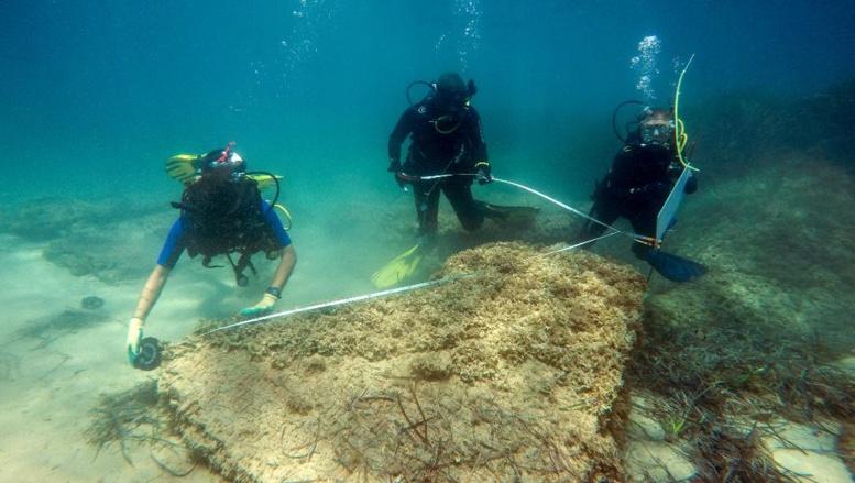 Tunisie: une cité romaine découverte sous la mer près de Nabeul