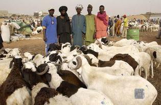 La fièvre de la Tabaski monte à Dakar