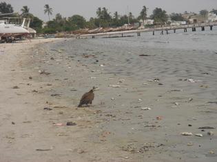 Daka, la baie de Hann défigurée