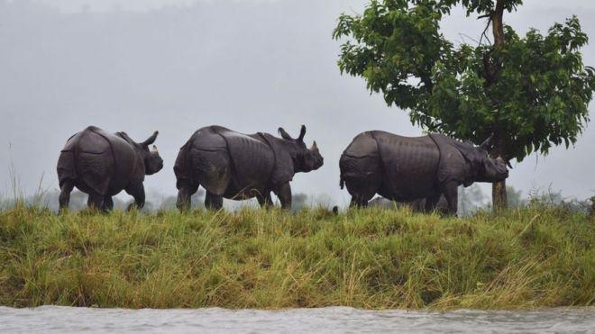 Des rhinocéros noirs attendus au Tchad — Af Sud