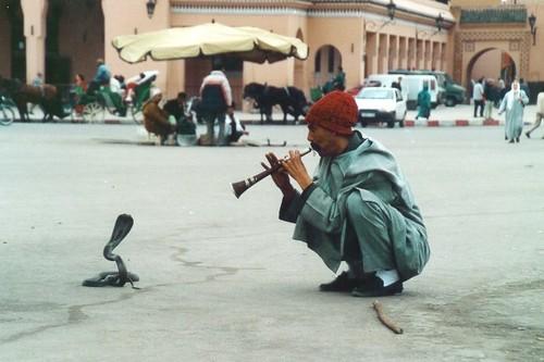 """Nigéria: une université recrute des """"charmeurs de serpent"""""""