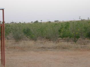 Culture des agro carburants: «il faut suspendre les programmes d'investissement industriel», selon des ONG