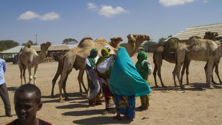 Les enjeux de l'élection présidentielle au Somaliland