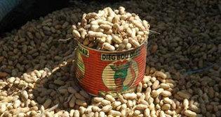Production arachidière: 700 mille tonnes hantent le sommeil des producteurs