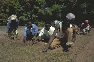 Des institutions de recherche agronomique s'invitent à la lutte contre la pauvreté
