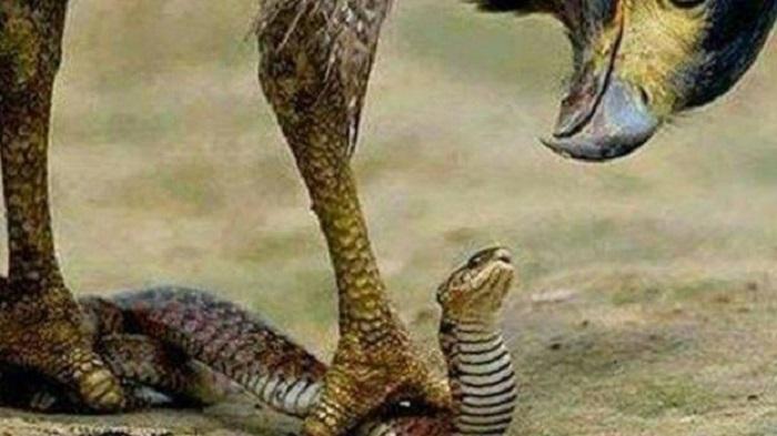 Détournement : la comptable accuse le serpent