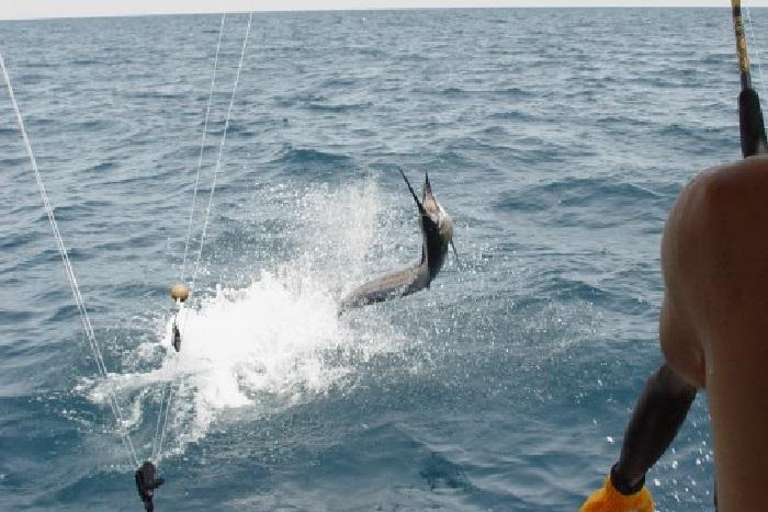 Protection des ressources halieutiques : Macky Sall généralise les aires marines protégées