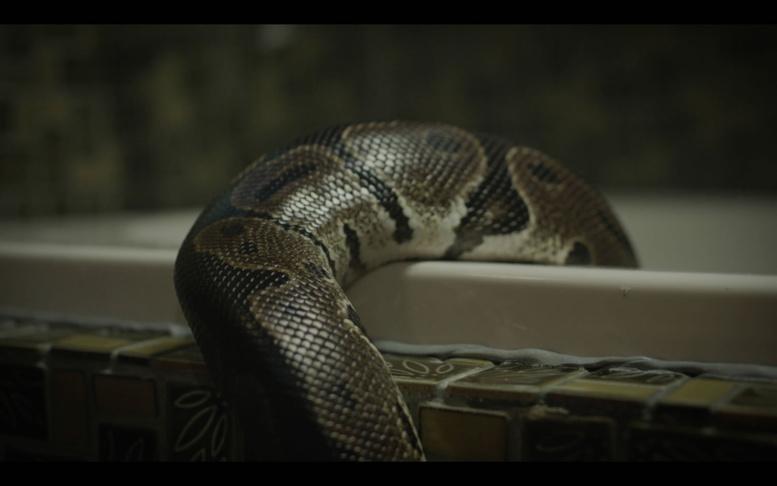 """Urgent - Un """"serpent"""" vient troubler le procès Khalifa Sall"""