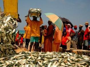 Le marché aux poissons à Kayar au Sénégal