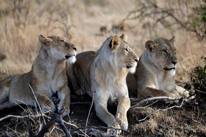 Les Etats-Unis rétablissent le droit d'importer des trophées de chasse d'Afrique