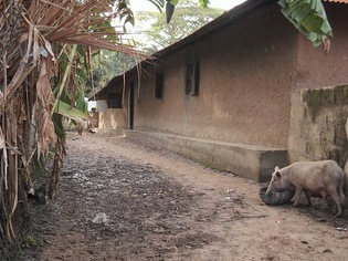 Coopération Sénégal-USA : L'USAID finance pour le retour de la paix en Casamance
