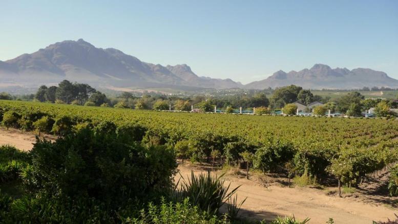 Afrique du Sud: le secteur viticole durement touché par la sécheresse