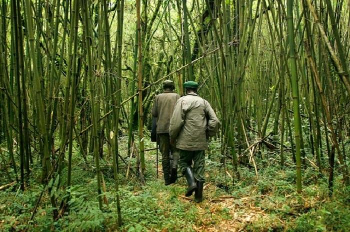 RDC: les deux touristes britanniques kidnappés dans les Virunga sont libres