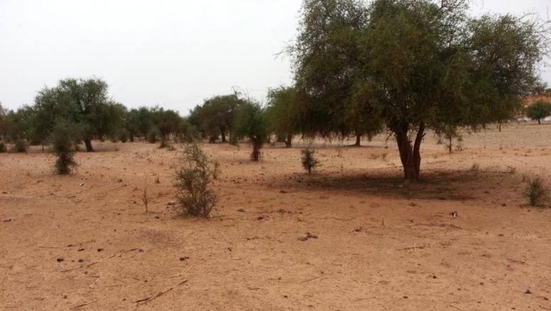 Terrorisme: le «groupe EI dans le Grand Sahara» sur la liste noire américaine