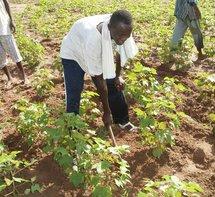 Accaparement et sécurisation des terres arables : End pronat attire l'attention des autorités