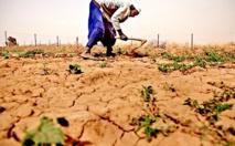 """Etude sur l'impact de l'assurance agricole indicielle:  """"le taux de substitution à travers le monde est faible"""", (L'Ugb )"""