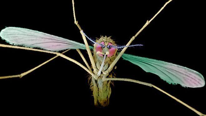 Un nouveau traitement contre le paludisme récurrent