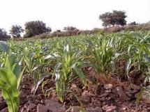 Les investissements dans la recherche agricole au Sénégal sont en constante régression (étude)